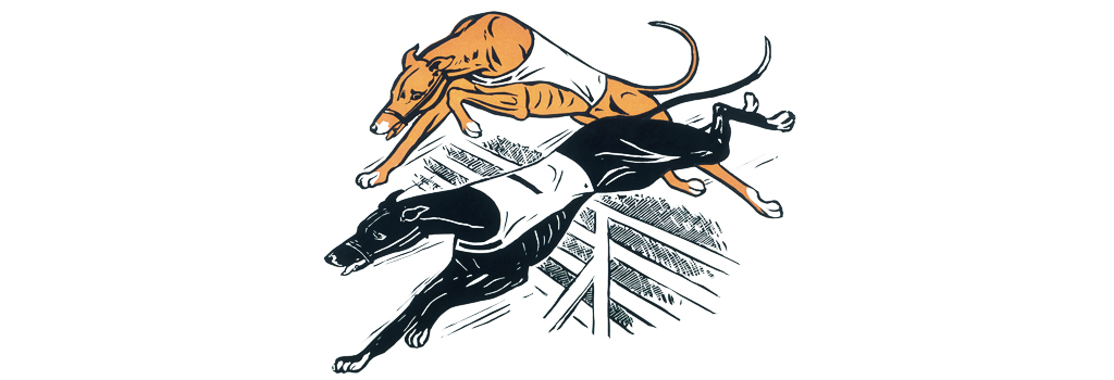 Greyhounds over hurdles