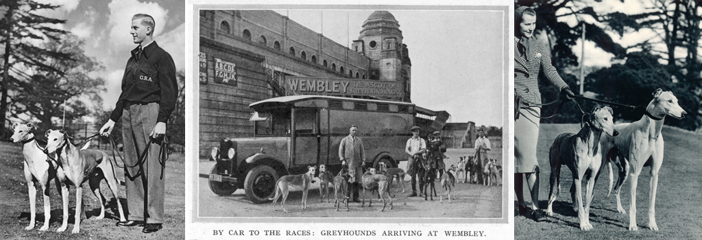 Greyhounds arriving at Wembley by car
