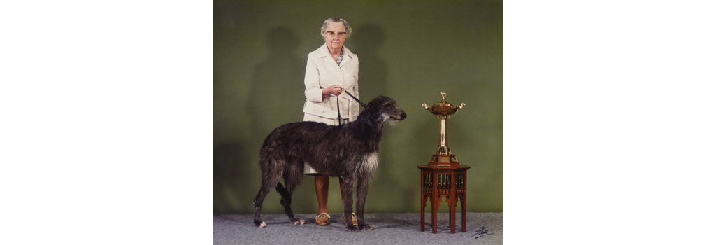 Miss A. N. Hartley with her prize-winning Deerhound, Champion Betsinda of Rotherwood - with Cruft's Gold Trophy for the Hound Group. Date: 1982