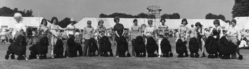 Fourteen Standard Poodles - Winners of the Progeny Class - Windsor Dog Show. Date: 1972