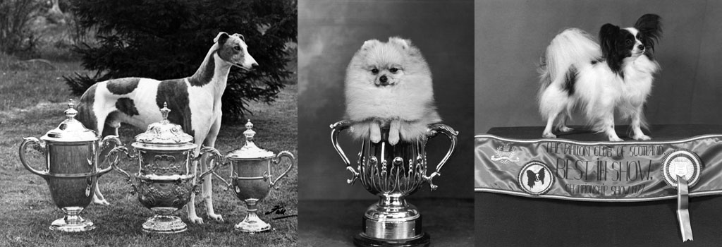 FALL/CRUFTS/1956/GREYH'D