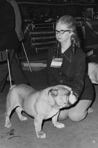 Bulldog Club's Centenary Show on 8th March 1975 - The reserve B.I.S. (Best in Show) - Champion Beechlyn Golden Nugget of Denborough with Mrs Dennis Shaw.     Date: 1975