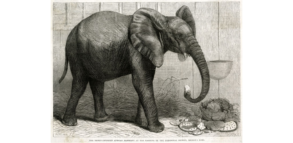 Jumbo the elephant at Regent's Park, 1865