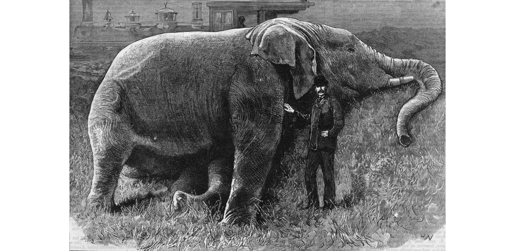 The body of Jumbo the elephant
