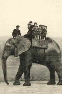 Searching for Jumbo – an Elephant in the Archive