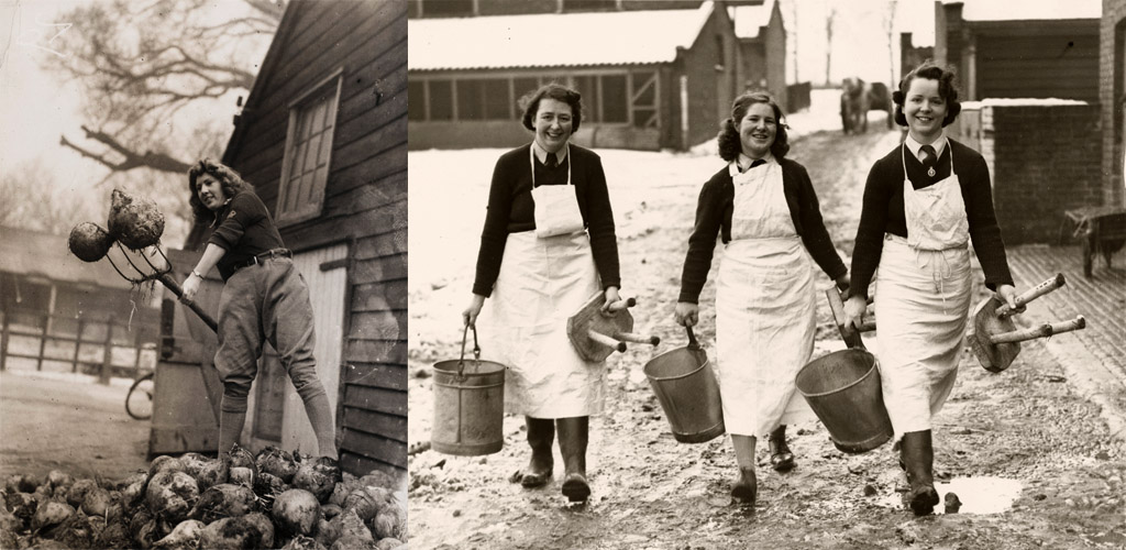 Land Girls working as milkmaids milking cows on a farm in Tooting during World War II. Miss Ivy Baldwin (on the left) was a mulitple shop worker).