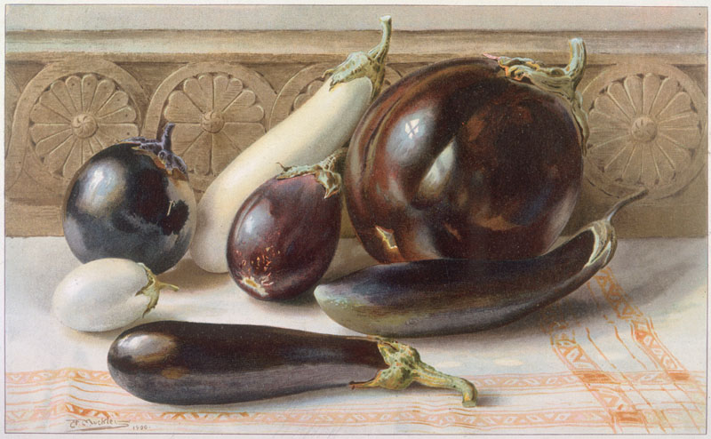 A still life of purple and white aubergines (or eggplants) displayed on a cloth.    circa 1900
