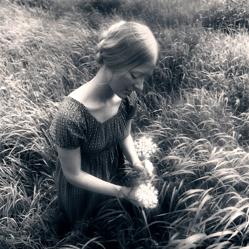 Woman in field of waist-high grass picking Queen Anne's Lace (Daucus Carota).  1970s