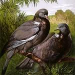 WOOD PIGEONS (Columba palumbus)       Date: 1877