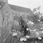A view of a tabby cat sat on a chest tomb overgrown with grasses and large daisy flowers, in the graveyard immediately to the south of the Priory Church of St Mary and St Blaize at Boxgrove Priory, West Sussex., West Sussex     Date: 1950 - 1965