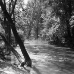 A flooded stream in Wanstead Park, Essex.       Date: 1930s