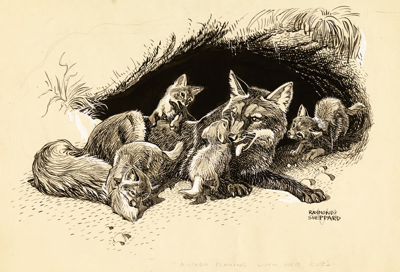 A vixen playing with her fox cubs.     Date: